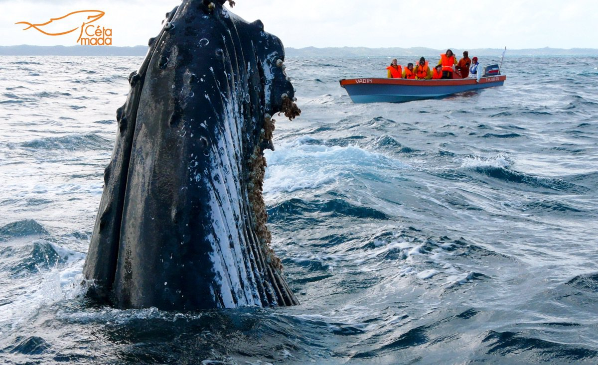 whale watching sainte marie nosy boraha